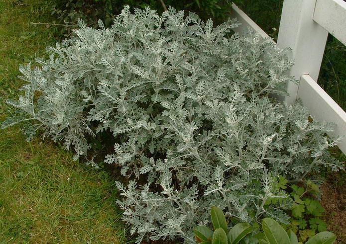 Binicaise plantes et arbrisseaux for Plante qui aime l ombre