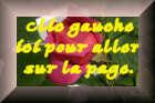 rosesenboutons2.jpg
