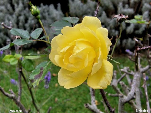 fleursdautomne102672.jpg