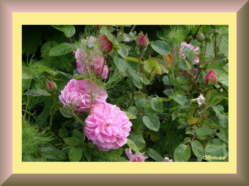 jardin2007.jpg
