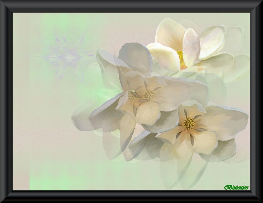 magnolias01.jpg
