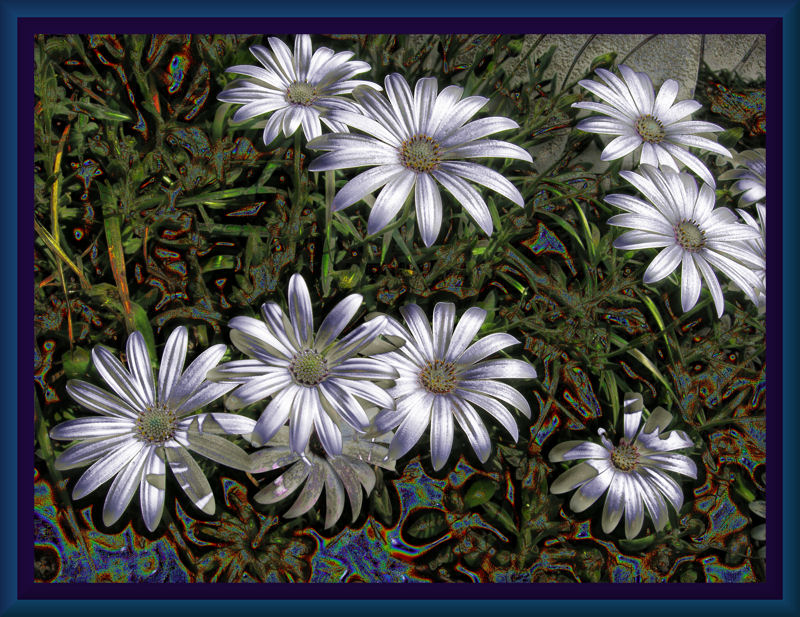 osteopornums01.jpg