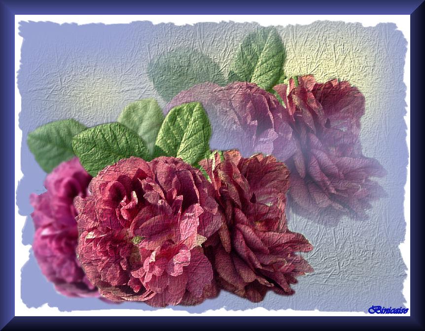 roses07.jpg