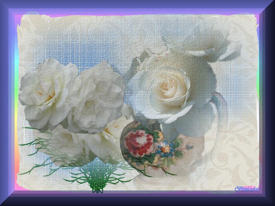 roses071.jpg