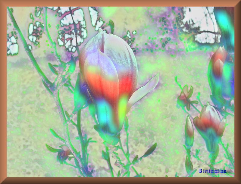 tulipier01.jpg
