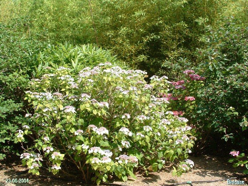 jardinexotiquedeponteilla05.jpg