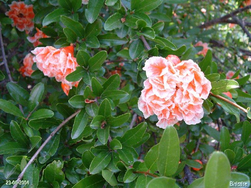 jardinexotiquedeponteilla08.jpg
