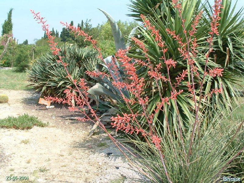 jardinexotiquedeponteilla18.jpg