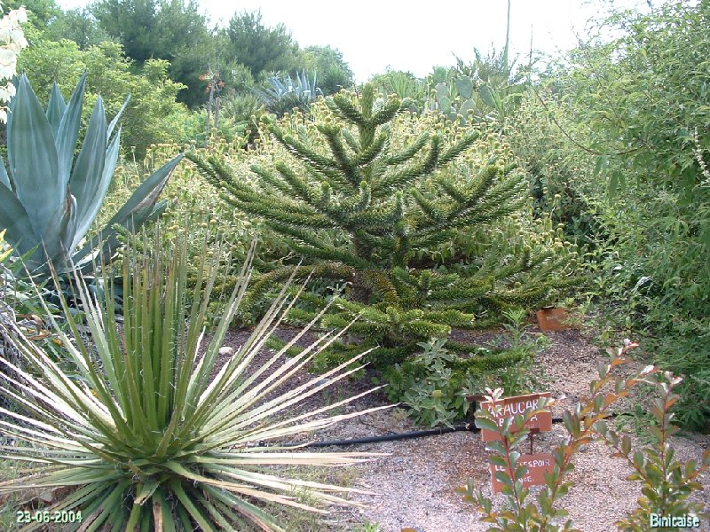 jardinexotiquedeponteilla21.jpg