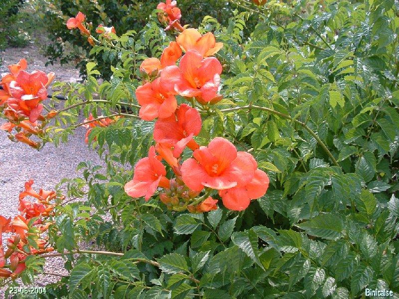 jardinexotiquedeponteilla22.jpg