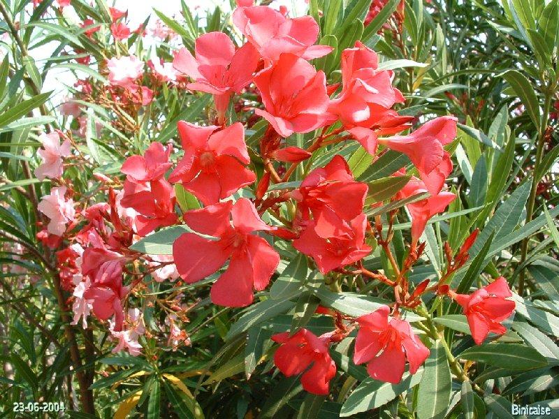 jardinexotiquedeponteilla24.jpg