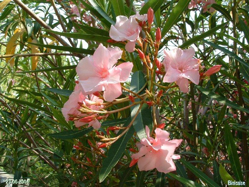 jardinexotiquedeponteilla25.jpg