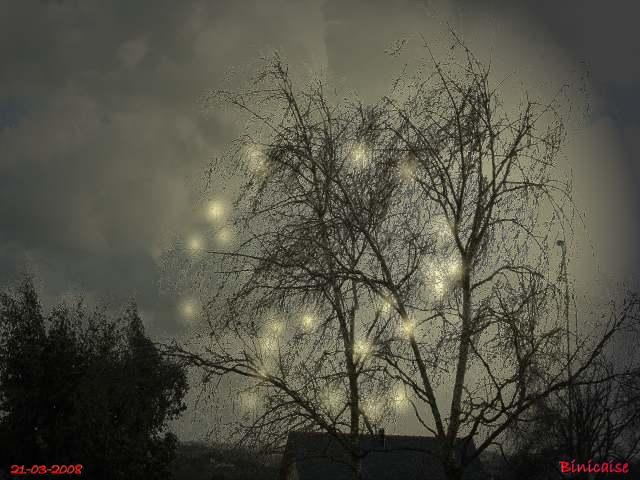 arbres01.jpg