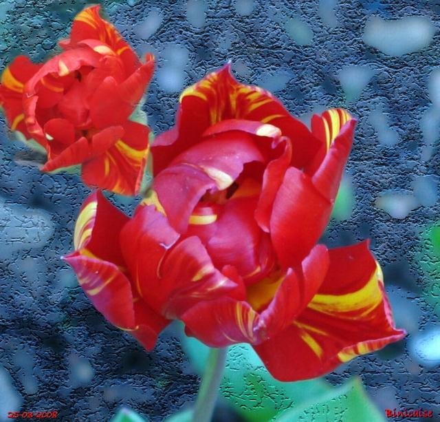 tulipeblog01.jpg