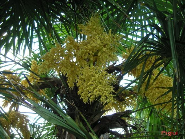 binicaise fleur du palmier chanvre. Black Bedroom Furniture Sets. Home Design Ideas