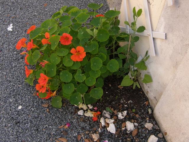 fleursenlibert04.jpg