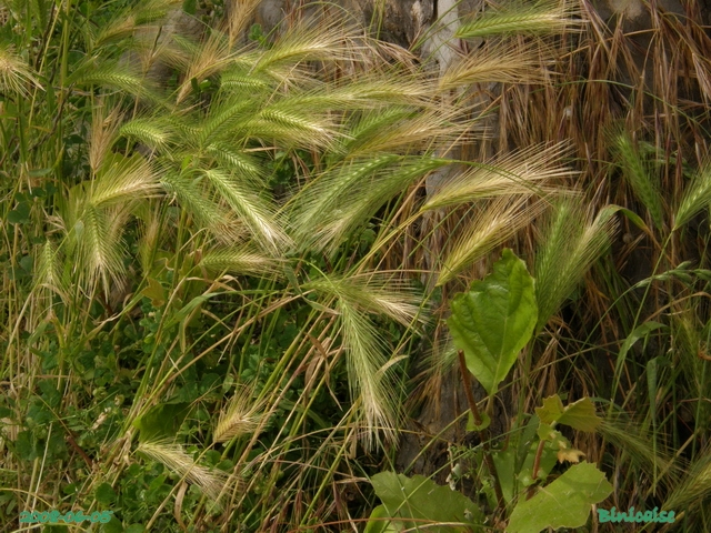 herbesfolles6054599.jpg