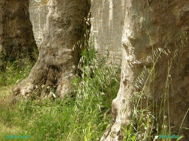 herbesfolles6054603.jpg