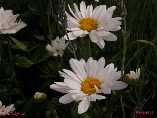 jardinsdtbis7105350.jpg
