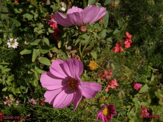 fleursdaout20088045513.jpg