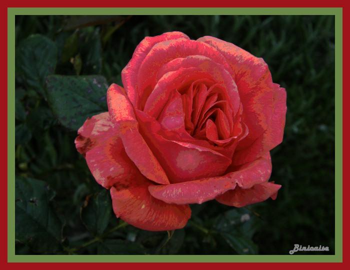 roserose02.jpg