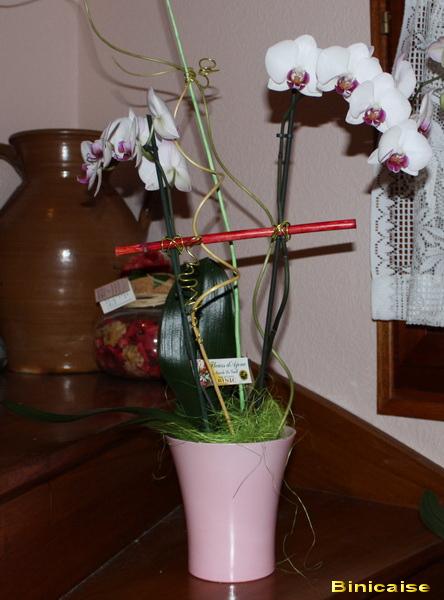 orchidsblanchesbis.jpg