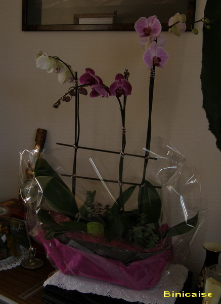 orchidsmauves116487bis.jpg