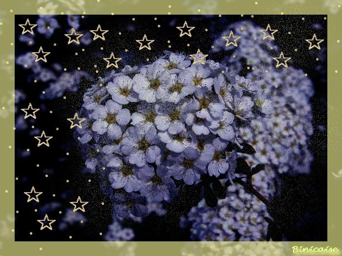 fleursblanchesbleutes.jpg