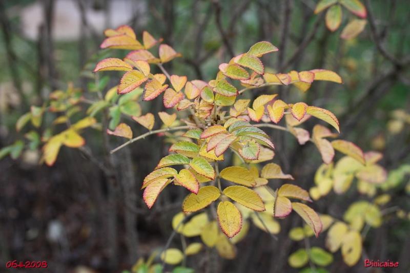 Binicaise jardin de novembre feuillages - Jardin novembre ...