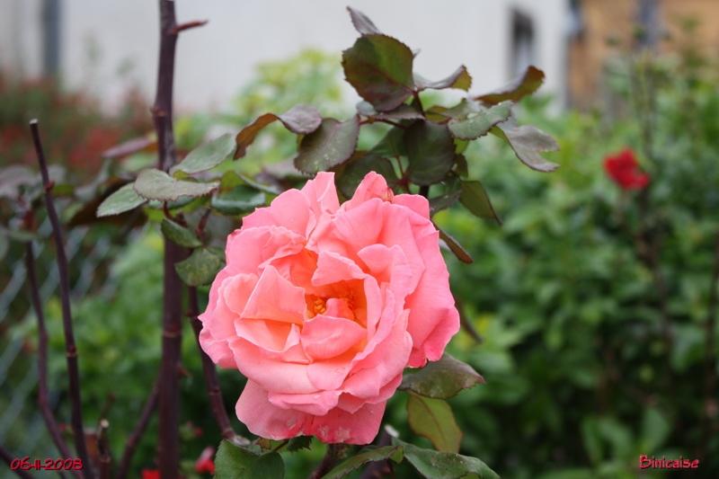 jardinsdenovembre0757.jpg