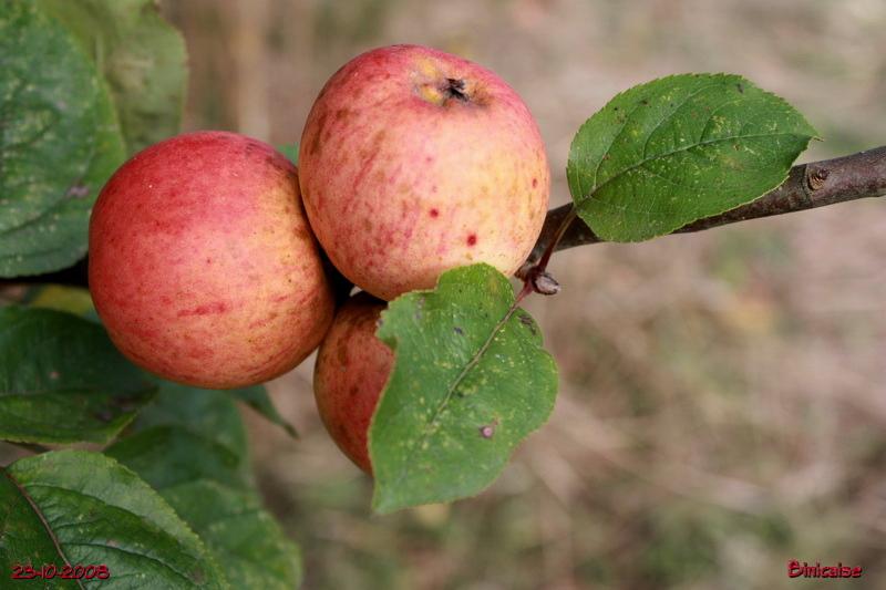 pommesbretonnes541.jpg