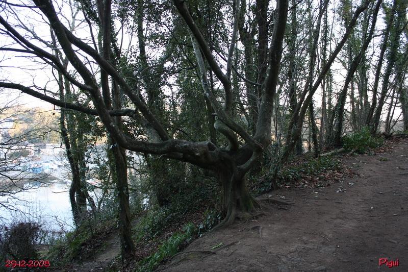 arbretordu1882.jpg