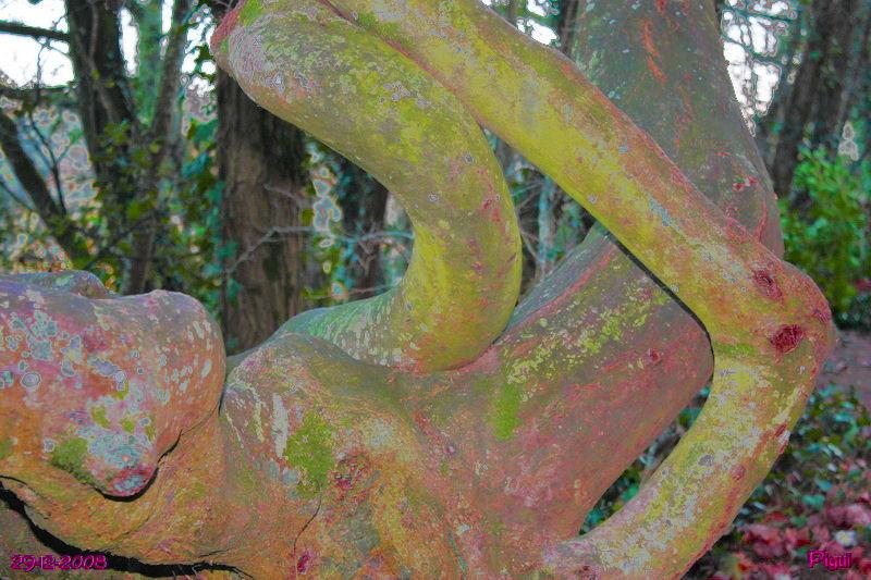 arbretordueffets21885.jpg