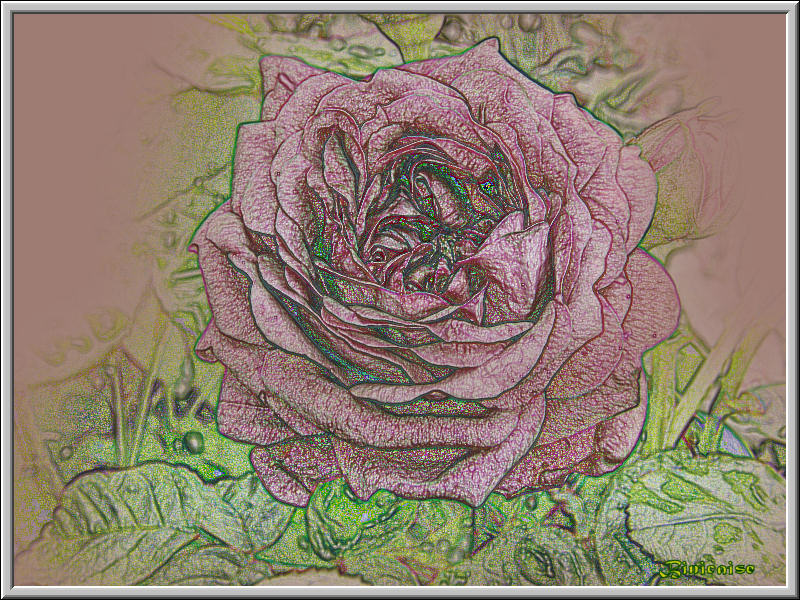 rosepale02.jpg