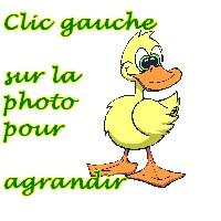 clicgauchecanard.jpg