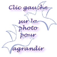 clicgaucheoiseaux.jpg