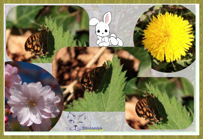 papillonsfleurs.jpg