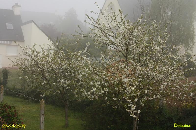 cerisiers200948213.jpg