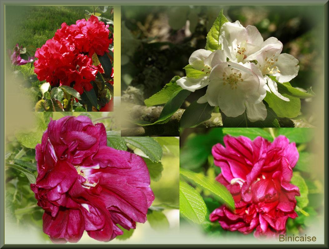 fleursauray.jpg