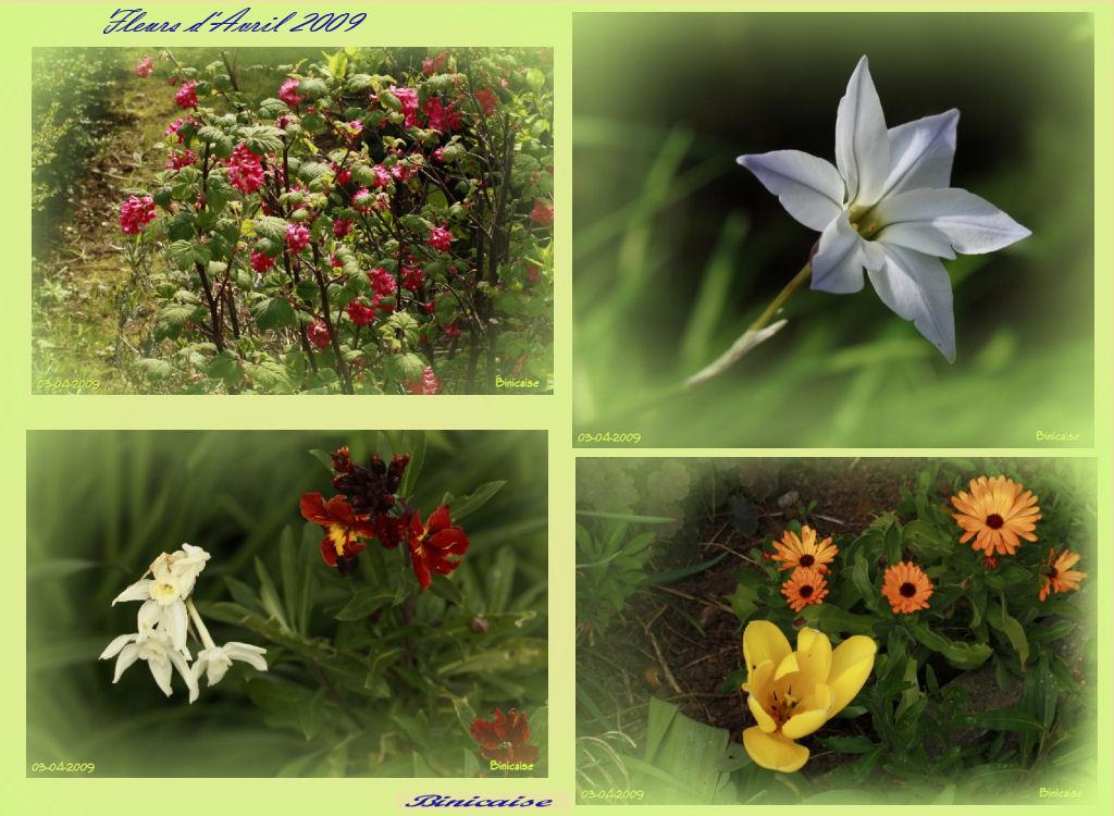fleursdavril2009.jpg