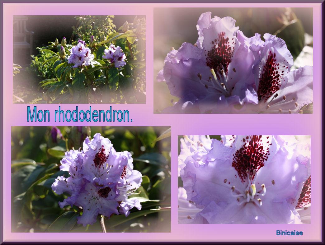 monrhododendron.jpg