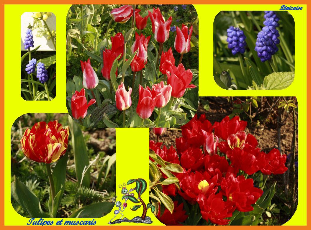 tulipesetmuscaris.jpg
