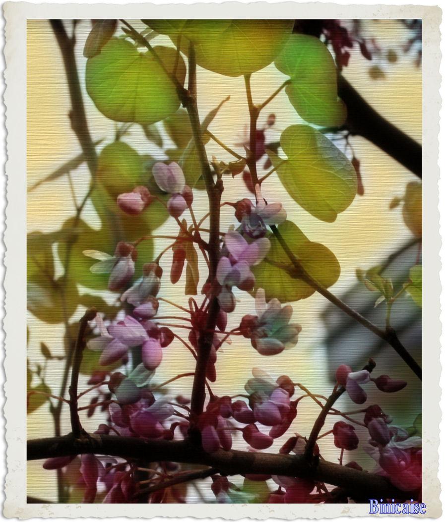 arbredejudecra1.jpg
