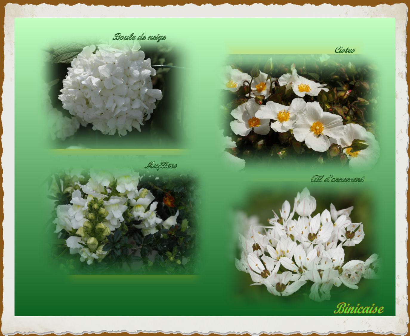 fleursblanches.jpg