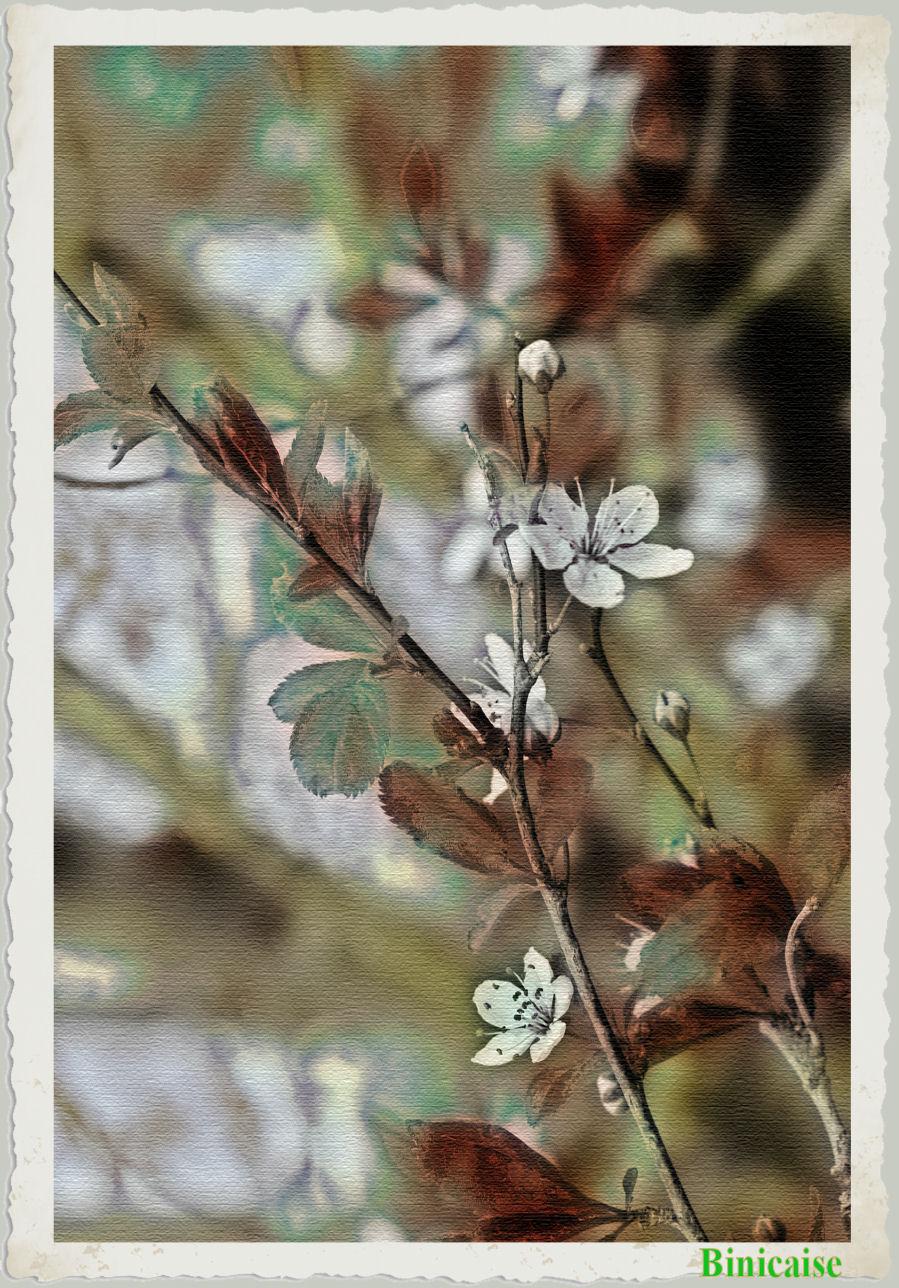 fleursdeprunus.jpg