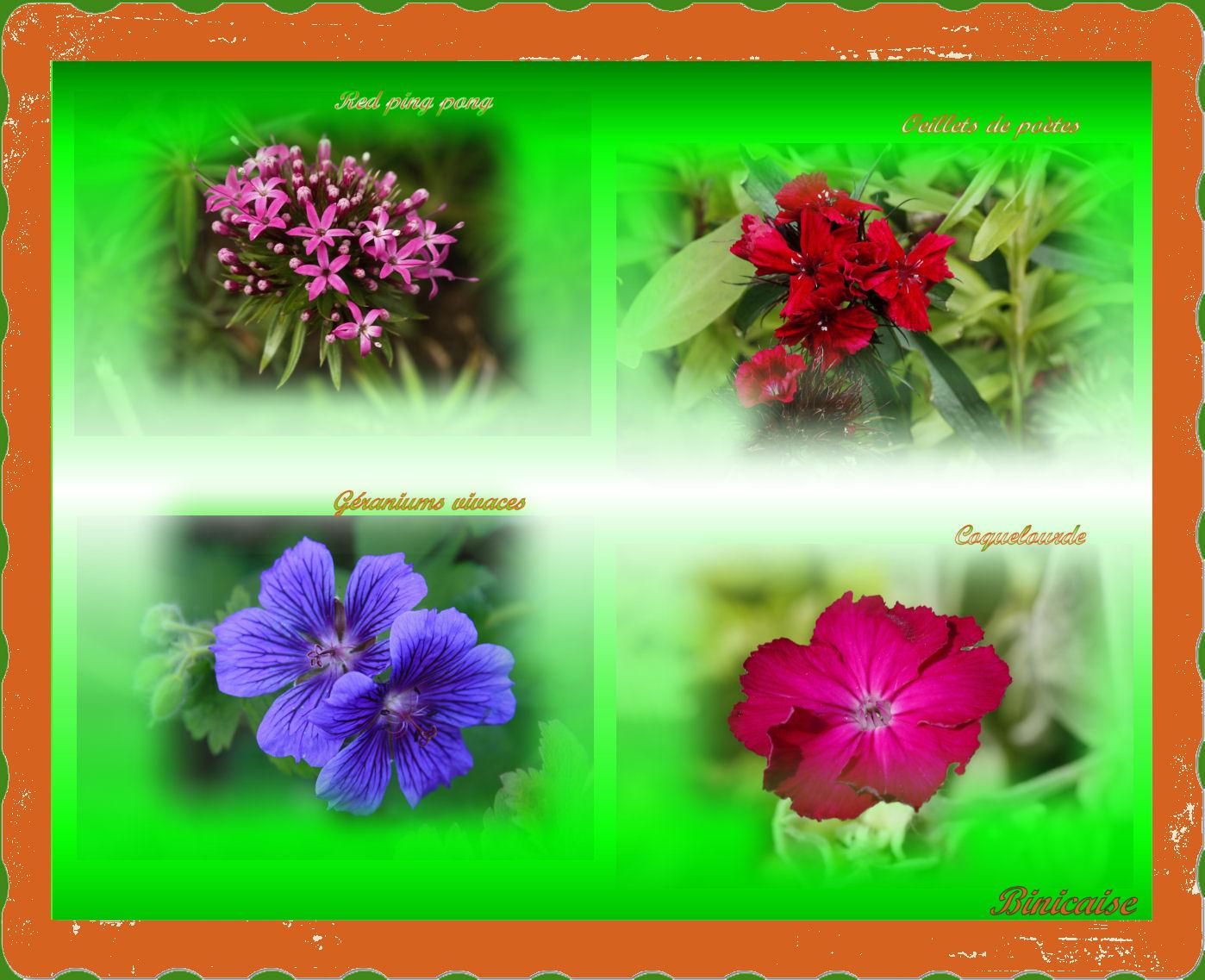 fleursdiversesmai2009.jpg