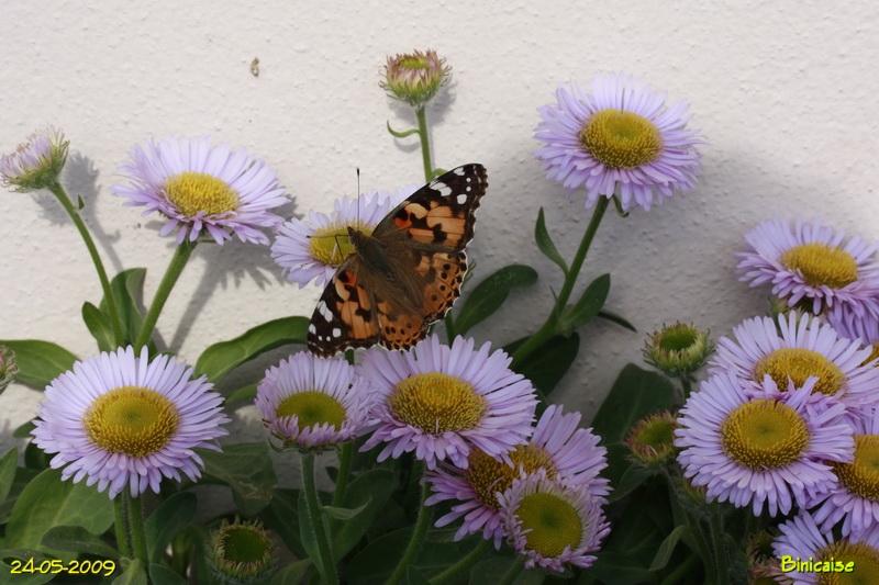 papillons5680.jpg