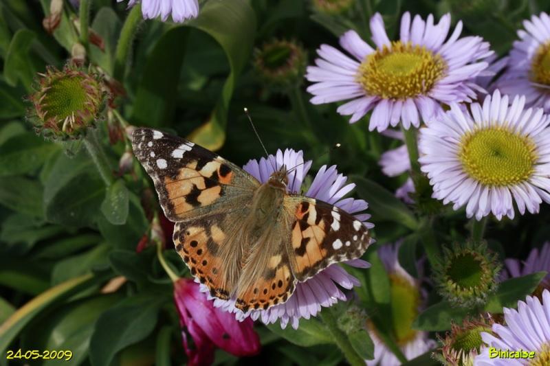 papillons5682.jpg