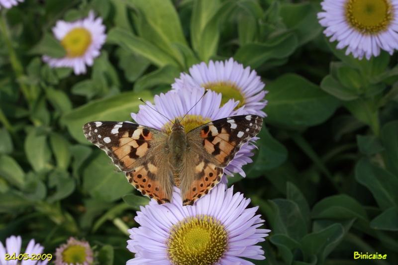 papillons5683.jpg