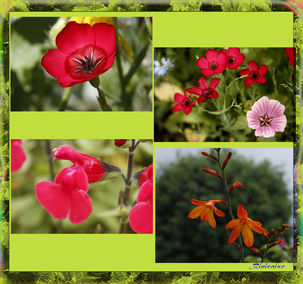 fleursdujardin.jpg